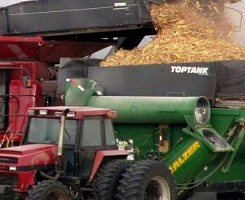Co-harvesting of maize and ..